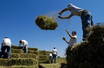 Kids from Sorenson's Ranch, a school for troubled teens in Koosharem, bail hay in the summer heat on a field in Aurora earlier this month.