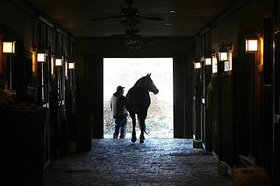Wayne Robb walks one of the thoroughbred horses he tends to at the Barton Ranch in Duchesne County out of the barn for some exercise. The ranch, outside the town of Duchesne, is one of the largest horse breeding operations in the state.