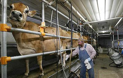 Lars Woolsey, who runs the Woolsey Dairy in Payson, wipes off a cow's udder before beginning the milking process. The dairy has customers all over Utah.