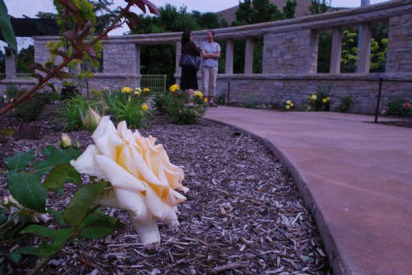 Gardening Utah S Arid Climate Makes Rose Care Relatively Easy The