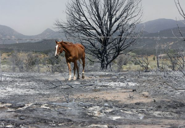 A horse wanders Sunday in a field laid waste by the fires that raged through New Harmony overnight.