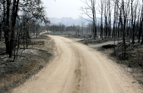 New Harmony Trailhead Road is lined with charred fileds and trees Sunday.