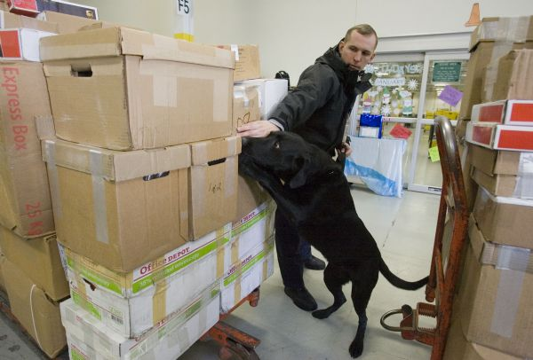 Jim Urquhart  |  The Salt Lake Tribune Daniel Hillery, explosive detection dog handler, works with his dog Max in searching packages of returns Tuesday, January 19, 2010 at the Internal Revenue Service's ARKA facility in Ogden. The Ogden IRS facilities process business tax forms. The facilities employ about 6,500 staff and processed approximately 46 million returns in 180 different forms in 2009.