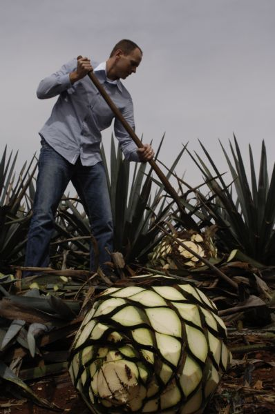Courtesy John Barlow tries his hand at cutting an agave plant at a distillery in Mexico.