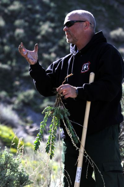 Rick Egan   |  The Salt Lake Tribune  Mike Duncan, botanist for the Wasatch/Cache National Forest, digs up   invasive weeds in the foothills above Salt Lake City,  Friday, May 7, 2010.