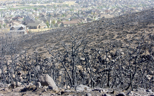 Al Hartmann  |  The Salt Lake Tribune View of of burned scrub oak and grass seen from the top of Fort Pierce Way (6275 W.) in Herriman on Tuesday, September 21st.