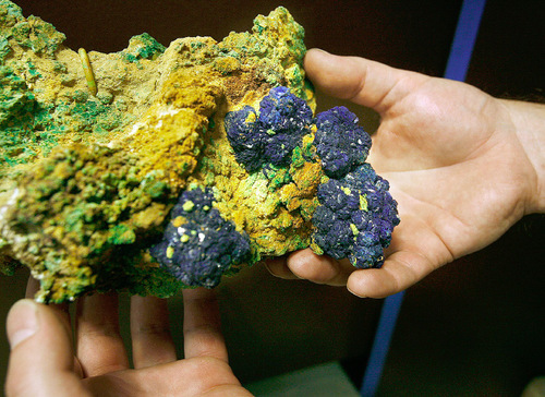 Scott Sommerdorf  l  The Salt Lake Tribune A world-class specimen of Azurite found in San Juan County will be one of the items on display at The Utah Museum of Natural History. The Utah Museum of Natural History is staging its last