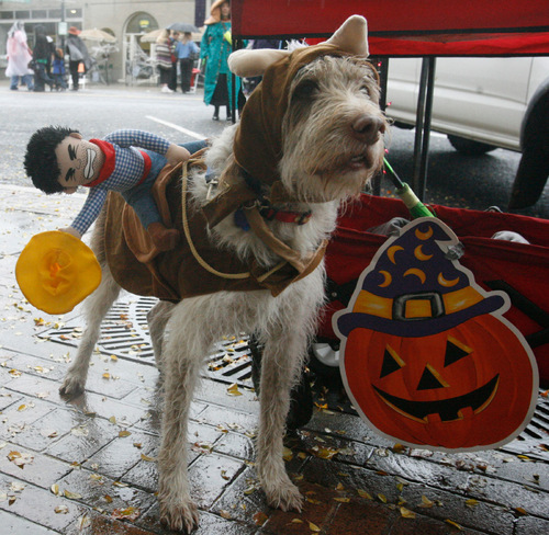 Rick Egan   |  The Salt Lake Tribune  Stitch the dog, tries to stay dry at the Witchstock festival on Historic 25th Street in Ogden, Saturday, Oct. 23, 2010.