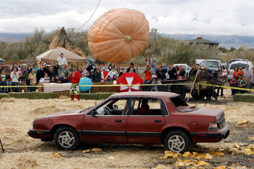 Francisco Kjolseth  |  The Salt Lake Tribune The year's state record pumpkin of 1,169 pounds is dropped on Saturday onto a car from a 175-foot crane at Hee Haw Farms in Pleasant Grove, completely destroying a Pontiac 6000. The pumpkin was grown by Matt McConkie from Mountain Green and it is calculated that the descent of the giant pumpkin reached a top speed of 67.1mph for 3.1 seconds before meeting its end.