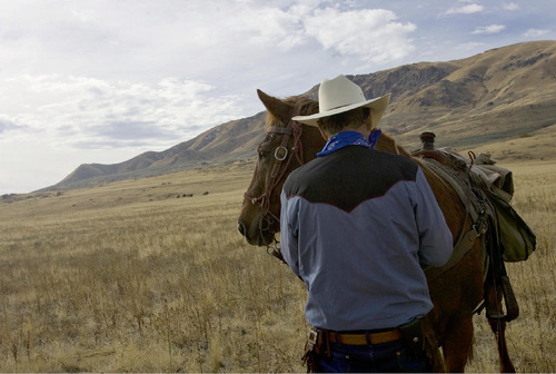Djamila Grossman  |  The Salt Lake TribuneBud Cook of Livingston, Texas, gets his horse ready after a lunch break during the 24th annual bison roundup on Antelope Island, Friday, October 29, 2010.