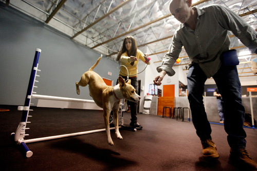 Play Dead Dogs Learn New Tricks Hollywood Style The