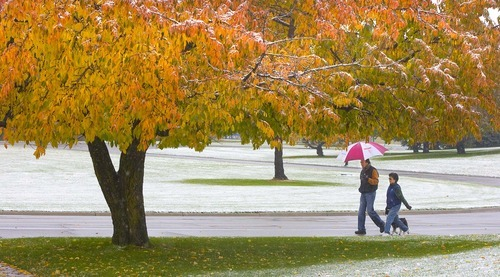Paul Fraughton  |  The Salt Lake Tribune   Kraig and Vicki Kaizumi  walk their dog