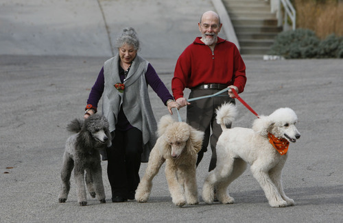 Francisco Kjolseth  |  The Salt Lake Tribune Anne Dolowitz and her husband David of Salt Lake, who both suffer from asthma, take their standard poodles, Gabby, Mr. Wilson and Dexter, from left, for their daily walk on Saturday, Nov. 13, 2010. When the inversion sets in they are unable to take their walks because of the aggravating effects.