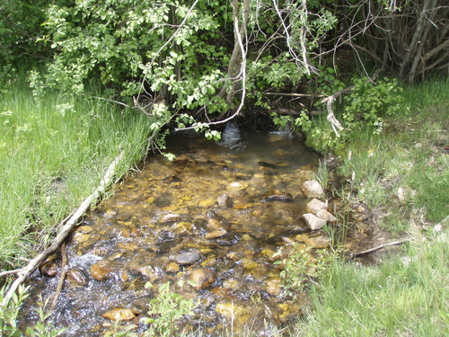 Utah Division of Wildlife Resources | Tiny Beaver Creek on the east side of the LaSal Mountains is the home to a unique strain of cutthroat trout called greenback.