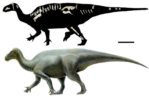 A rendering of a new dinosaur species, dubbed Iguanacolossus, found near Green River. Rendering courtesy Utah Department of Natural Resources