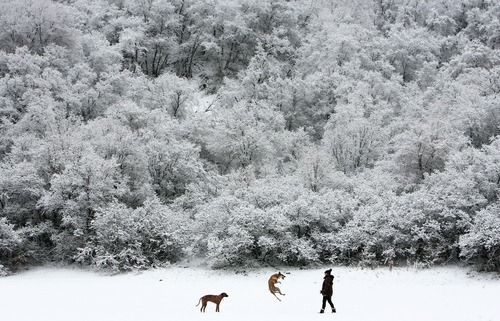Steve Griffin  |  The Salt Lake Tribune   Alicja Booth throws snowballs to her dogs Leo and Toby as they enjoy the dog park at the mouth of Emigration Canyon Monday, December 20, 2010. A storm dusted the foothills along the wasatch front with snow.