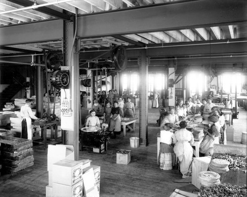 Boxing salt water taffy at the Sweet Candy Co., circa 1920. Photo from