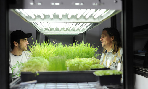 Sarah A. Miller  |  The Salt Lake Tribune  Co-owners Robb Baumann and Lance Heaton experiment with growing microgreens at their company Mountain Valley Seed Co. in Salt Lake City. Microgreens are becoming a popular option for home cooks to grow indoors for themselves.