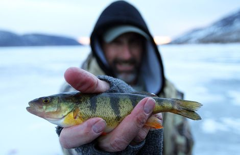 Fish lake beckons hardy ice fishers the salt lake tribune for Sun perch fish