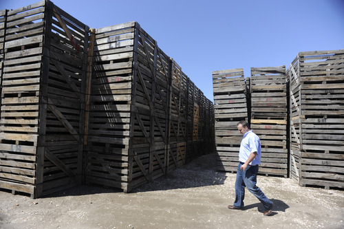 Sarah A. Miller  |  The Salt Lake Tribune  Shawn Hartley, one of three owners of Utah Onion, walks past crates used to store onions at his Syracuse business. If the proposed West Davis Corridor plan is approved their growers would lose onion fields so Utah Onion would not have the need for such large storage room.