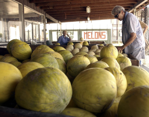 Many drivers have been know to slam on their brakes when they see a roadside stand boasting melons from Green River. The area is protected by the Book Cliffs and blessed with a light, sandy soil, conditions that allow cantaloupe, honeydews, watermelons and the like to grow large and sweet.