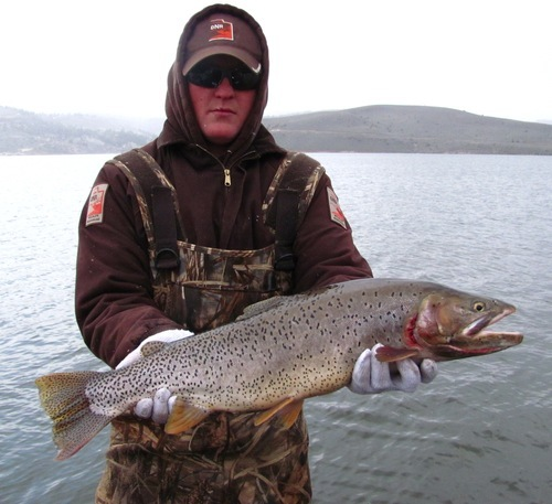 7 pound cutthroat caught and released at panguitch lake for Utah ice fishing report