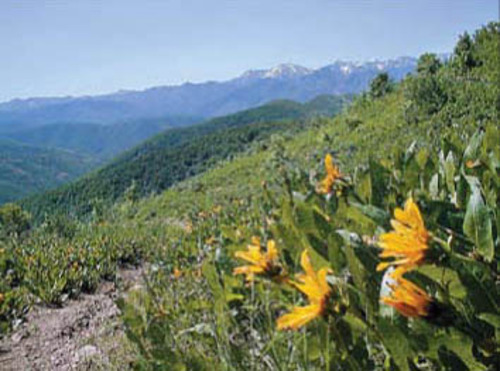 Steve Baker | The Salt Lake Tribune file photo  Wildflowers welcome hikers to the Killyon Canyon trail.