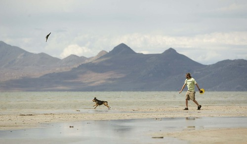 Trent Nelson  |  The Salt Lake Tribune A man plays fetch with his dog Wednesday on the shore of the Great Salt Lake near Saltair.