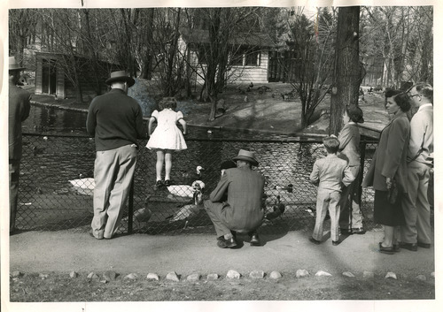 Visitors look at swans and ducks at Tracy Aviary in this photo dated March 26, 1951. Tribune file photo