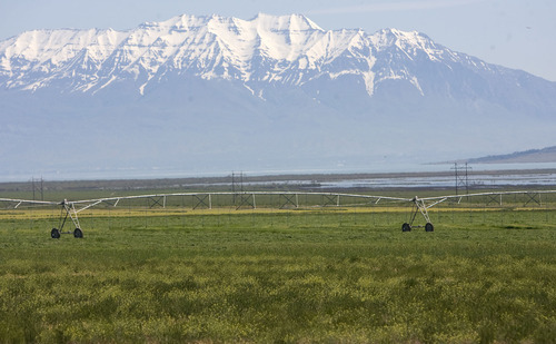 Al Hartmann   The Salt Lake Tribune  Snow on the Wasatch Mountains rise over Utah Valley and a recently cut alfalfa field near the town of Elberta.   Hay supplies are scarce and expensive this summer because of the cold, wet  spring.   Dairy farmers are especially hard hit.