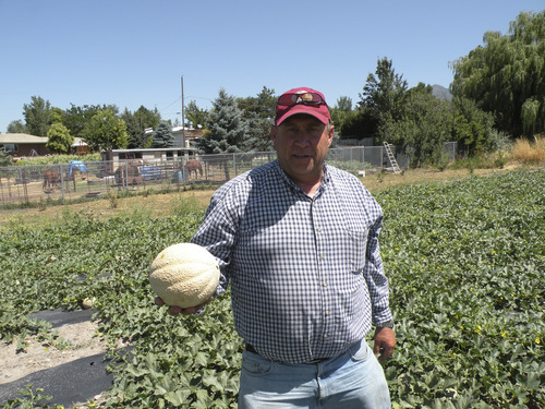 Erin Alberty | The Salt Lake Tribune Thayne Tagge displays a cantaloupe grown on land Salt Lake County is leasing near the Holladay Lions Recreation Center. The county leased three parcels as part of its urban farming initiative; Tagge says Holladay soil is particularly productive for melons.