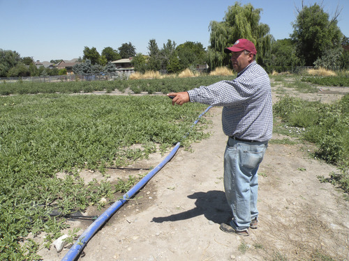 Erin Alberty | The Salt Lake Tribune Thayne Tagge points out his irrigation and mulching techniques Aug. 10 at his 3-acre farm on land Salt Lake County is leasing near the Holladay Lions Recreation Center.