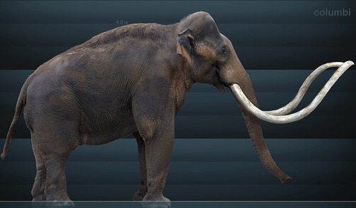 An artist's reconstruction of a Columbian mammoth, which roamed North America during the last Ice Age. This species is believed to have gone extinct 9,000 to 11,000 years ago. New research shows petroglyphs in southern Utah may depict this creature, giving scientists a rare opportunity to date rock art and offering proof that Paleoindians once shared the Colorado Plateau with these creatures.  Image courtesy of Sergiodlarosa | Wikimedia Commons