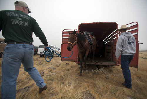 Horses used by Juab County Search and Rescue are unloaded near the base of Topaz Mountain as law enforcement is looking for missing Utah mother Susan Powell, on Saturday, Sept. 17, 2011, 50 miles northwest of Delta, Utah. Powell disappeared from her West Valley City home in December 2009 and hasn't been seen since. (AP Photo/Jim Urquhart)