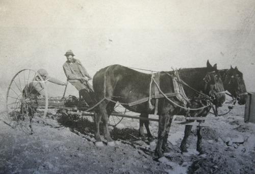 Tribune file photo Circa 1912, Clarion settlers use horse drawn farming equipment.  Sitting is Russian Jewish immigrant Aaron Binder who was known as the