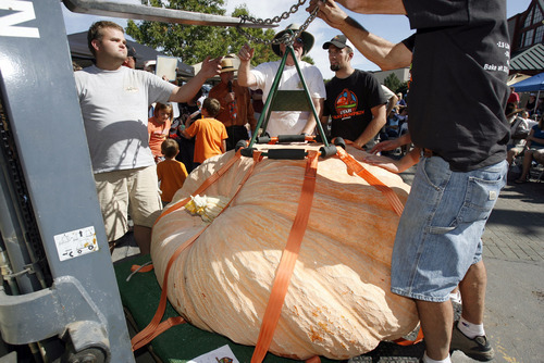 Francisco Kjolseth  |  The Salt Lake Tribune Crews use special rigging and a fork lift to move giant pumpkins at the second annual Harvest Festival at Thanksgiving Point in Lehi on Saturday. Multiple pumpkins in excess of 1,000 pounds were weighed before a cheering crowd with the previous state record of 1,169 pounds being broken by Matt McConkie, who held the previous record.
