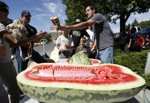 Francisco Kjolseth  |  The Salt Lake Tribune Kyle Clark, of Highland, slices up his 125-pound watermelon t the second annual Harvest Festival at Thanksgiving Point in Lehi on Saturday. In addition to various fruits and vegetables winning prizes, the main attraction was the giant pumpkin weigh-off.