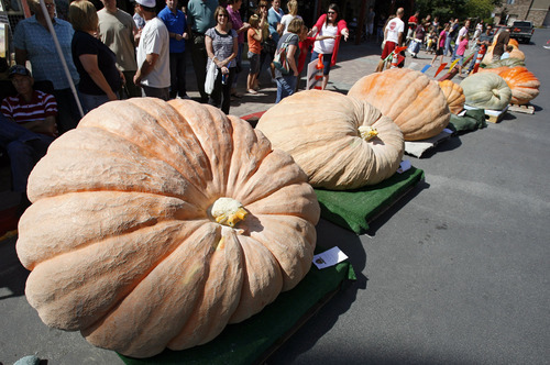 Francisco Kjolseth  |  The Salt Lake Tribune People gather around the giant pumpkins on display as part of the second annual Harvest Festival at Thanksgiving Point in Lehi on Saturday. The pumpkin at left, grown by Matt McConkie, broke the state record, weighing in at 1,600 pounds.