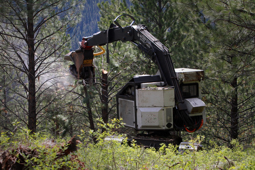 Rick Egan  | The Salt Lake Tribune   A masticator, heavy equipment used to mulch standing trees, works Aug. 1, 2011, on the Bitterroot National Forest to thin trees and leave the rest better able to defend against beetles.