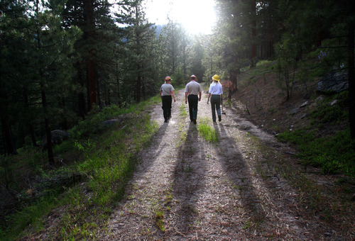 Rick Egan  | The Salt Lake Tribune   Cheri Hartless, Tod McKay and Nancy Sturdevant of the U.S. Forest Service walk June 27, 2011, on a forest road used for thinning trees above Lake Como, Mont. The area is among those the agency is trying to protect from beetles for its recreational values.