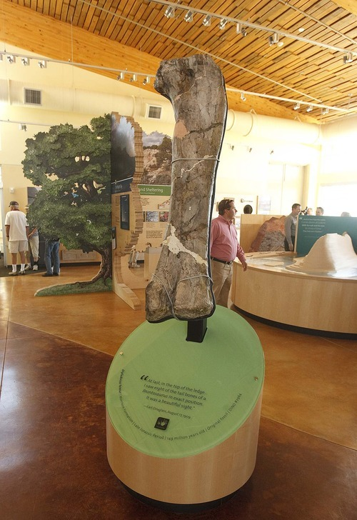 Trent Nelson  |  The Salt Lake Tribune The femur of a diplodocus on display in the new Dinosaur National Monument Visitors Center in Utah, Wednesday, September 28, 2011.