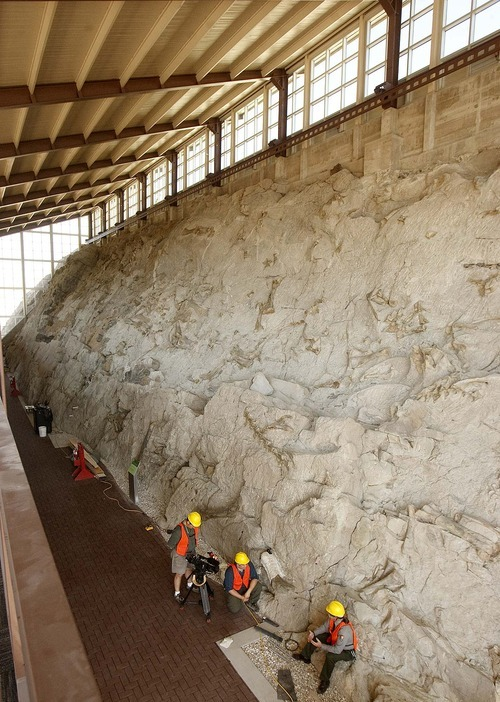 Trent Nelson  |  The Salt Lake Tribune Dinosaur bones protrude from the stone in the quarry building at Dinosaur National Monument, Utah, Wednesday, September 28, 2011. The new building is set to reopen on Tuesday after a long remodel.