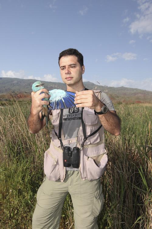 Courtesy Sedat Inak  University of Utah biologist Cagan Sekercioglu bands a Eurasian Roller in eastern Turkey.