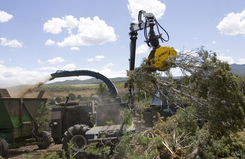Al Hartmann  |  The Salt Lake Tribune Mechanical arm picks up pinyon pines and junipers to place in a chipper for a biomass project south of Beaver. The collected chips may be burned to produce electricity or heat.