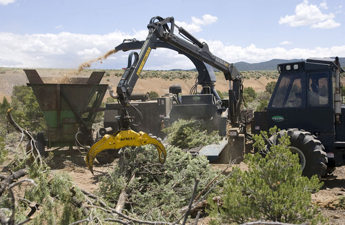 Al Hartmann  |  The Salt Lake Tribune Contractors use heavy equipment to pick up pinyon and juniper trees to place in chipper in a biomass project south of Beaver. The collected chips may be burned  to produce electricity.