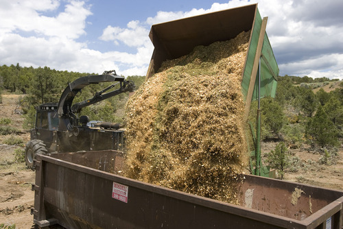 Al Hartmann  |  The Salt Lake Tribune Wood chips from pinyon pine and juniper trees are collected in a  container for a biomass energy project south of Beaver. The collected chips may be burned to produce electricity or heat.
