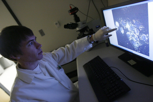 Francisco Kjolseth  |  The Salt Lake Tribune Ryan Robinson, a U of U senior bioengineering major and former valedictorian at Taylorsville High School, works in the lab at the Nano Institute of Utah on Tuesday, October 25, 2011. Recently Robinson won a national competition for his project on developing gold nano cages, which he points out on the screen, that could help deliver chemotherapy directly to cancerous tumors.