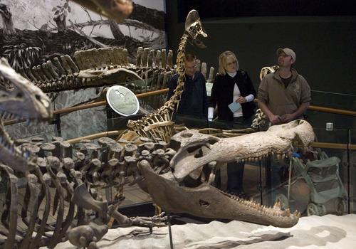 Steve Griffin  |  The Salt Lake Tribune   The dinosaur area of the new Natural History Museum of Utah in Salt Lake City, Utah Saturday, November 5, 2011.