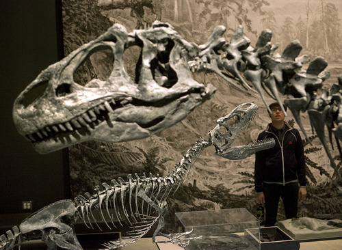 Al Hartmann  |  The Salt Lake Tribune Visitor stops to look at dinosaurs of the Jurrasaic period Friday morning during the public opening of the Natural History Museum of Utah.