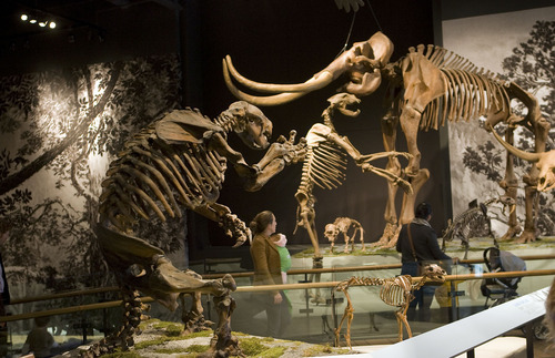 Al Hartmann  |  The Salt Lake Tribune Visitors stroll through the skeletons in the Mesozoic display Friday during the opening day of the Natural History Museum of Utah.